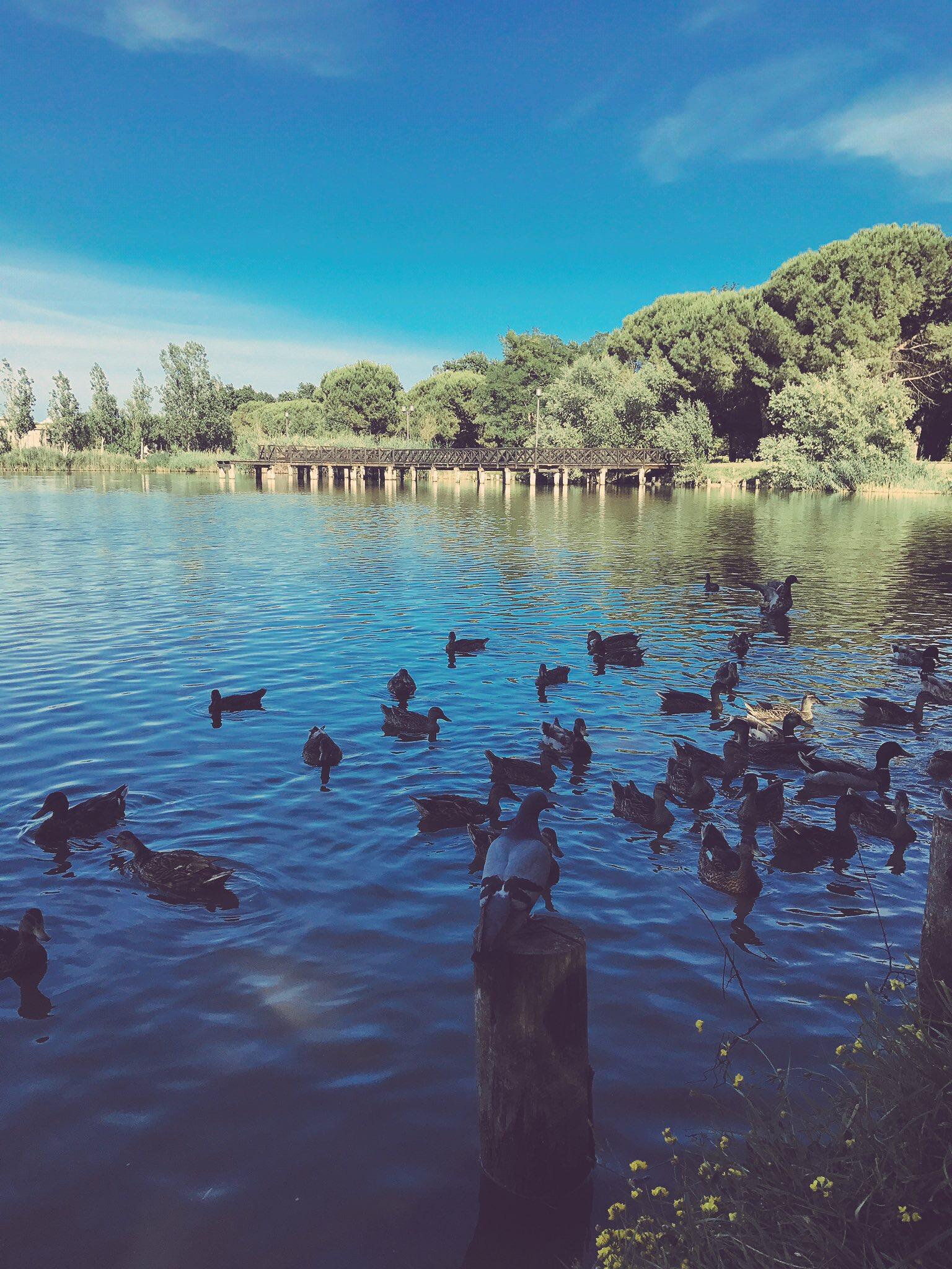 Parco del Gelso - Bellaria Igea Marina