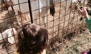 Giornata a Torriglia con bambini tra cavalli, animali e natura