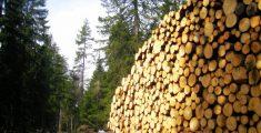 Malosco : viaggio in #Trentino tra natura e benessere