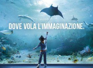 #Genova : #AcquariodiGenova e la nuova vasca dei delfini