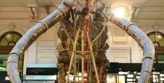 Giornata con bambini a Genova : il Museo di Storia Naturale Giacomo Doria