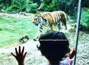 Weekend sul Lago di Garda con bambini tra parchi gioco, safari e giardini all'aria aperta