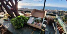 Pesto Kit : il regalo che profuma di Liguria